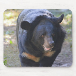 Black Spectacled Bear Mouse Pad