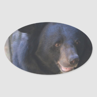 Black Spectacled Bear Oval Sticker