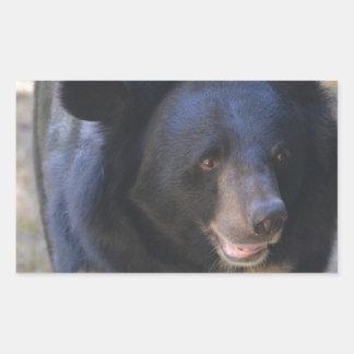 Black Spectacled Bear Rectangular Sticker