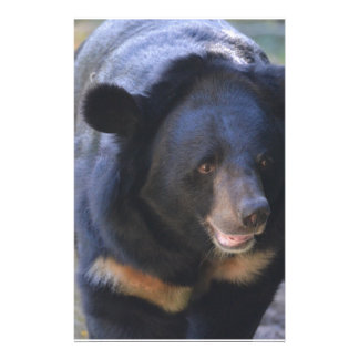 Black Spectacled Bear Stationery