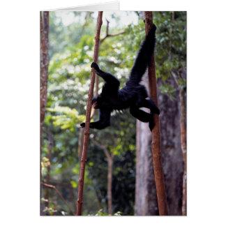 Black spider monkey (Ateles paniscus paniscus) Card