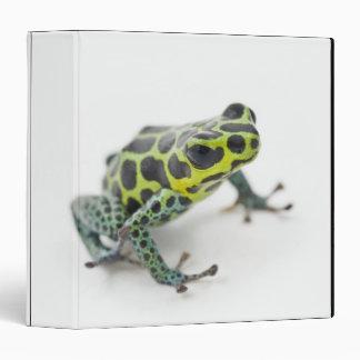 Black Spotted Green Poison Dart Frog 3 Ring Binder