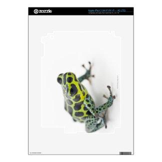 Black Spotted Green Poison Dart Frog iPad 3 Skins