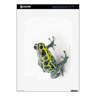 Black Spotted Green Poison Dart Frog iPad 3 Skins