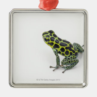 Black Spotted Green Poison Dart Frog Metal Ornament
