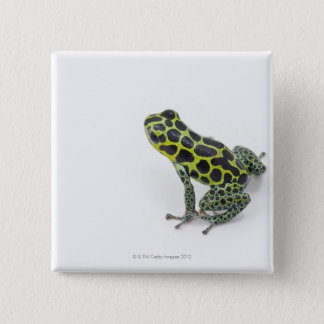 Black Spotted Green Poison Dart Frog Pinback Button