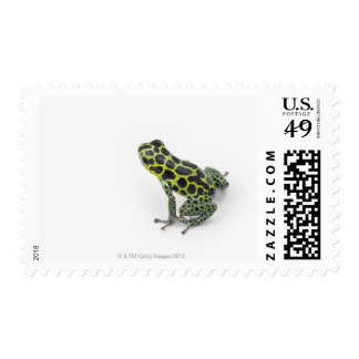 Black Spotted Green Poison Dart Frog Postage