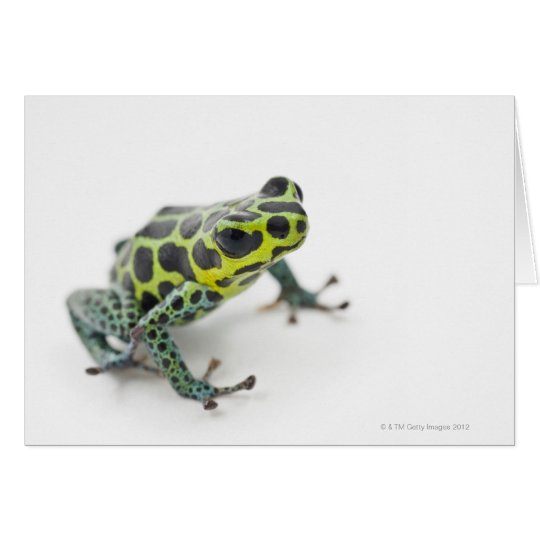 Black Spotted Green Poison Dart Frog (Ranitomeya Card