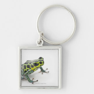 Black Spotted Green Poison Dart Frog (Ranitomeya Silver-Colored Square Keychain