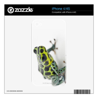 Black Spotted Green Poison Dart Frog Decal For The iPhone 4