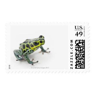 Black Spotted Green Poison Dart Frog Stamp