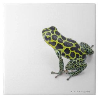 Black Spotted Green Poison Dart Frog Ceramic Tile