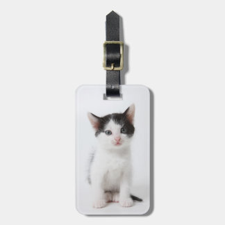 Black Spotted Kitten Luggage Tag