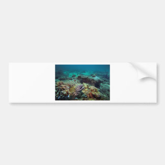 Black spotted moray eel bumper sticker