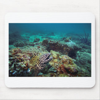 Black spotted moray eel mouse pad