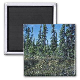Black spruce forest and ledum refrigerator magnets