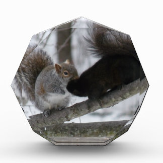 Black Squirrel Acrylic Award