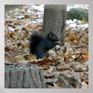 Black Squirrel Autumn Poster