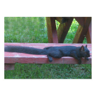 Black Squirrel Large Business Cards (Pack Of 100)