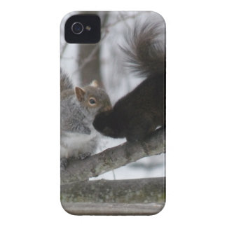 Black Squirrel iPhone 4 Case