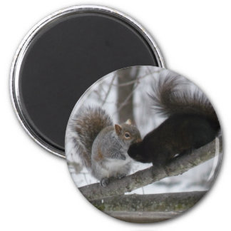 Black Squirrel Magnet