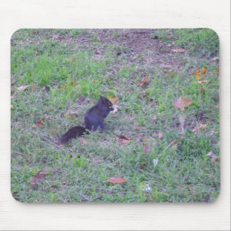 Black Squirrel Mouse Pad