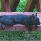 Black Squirrel Statuette