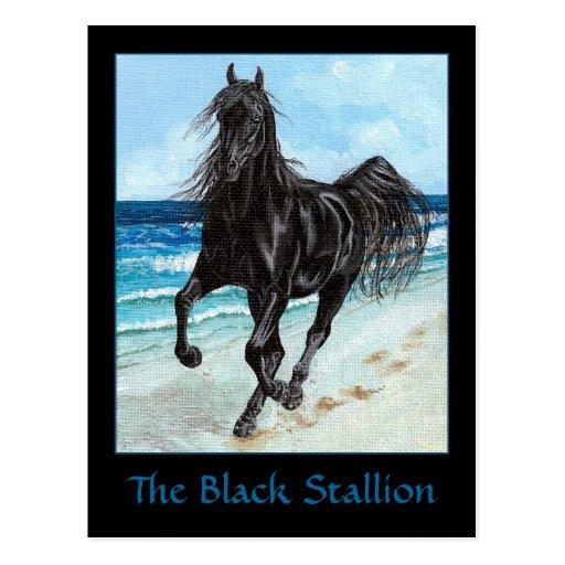 Black Stallion Arabian horse postcard