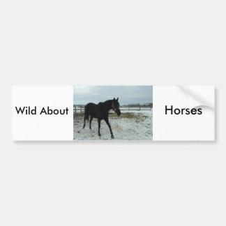Black Stallion Beauty Bumper Sticker