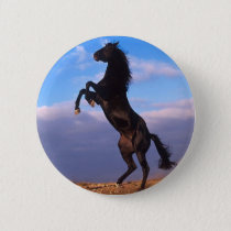 Black Stallion Button