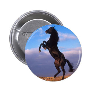 Black Stallion Button
