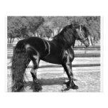 Black stallion horse custom announcements