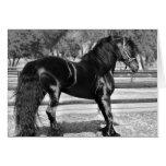 Black stallion horse greeting cards