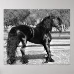 Black stallion horse print