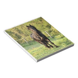Black Stallion Memo Note Pads