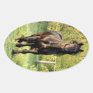 Black Stallion Oval Sticker