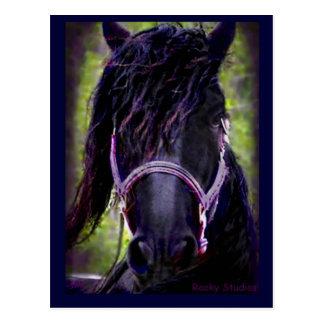 Black Stallion Postcard