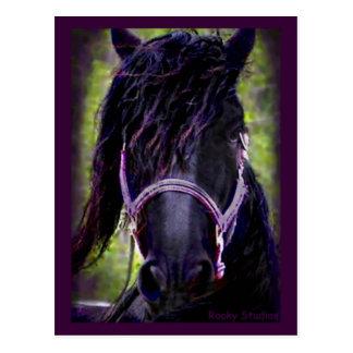 Black Stallion Postcard,customizable Postcard