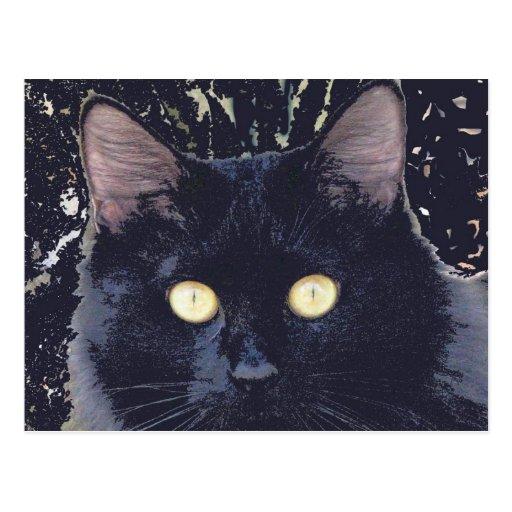Black Star Cat Postcard
