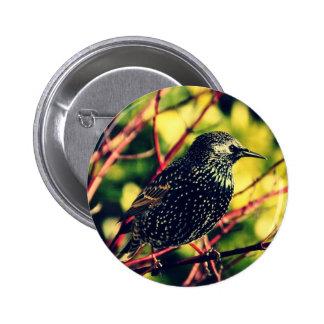 Black Starling Button