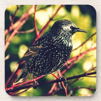 Black Starling Drink Coasters