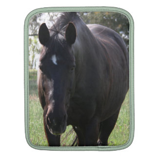 Black Stock Horse IPad Cover