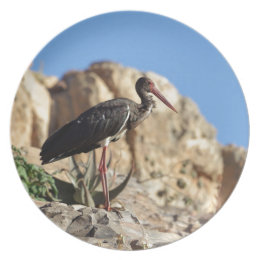 Black stork (Ciconia nigra) on a rock. Dinner Plate