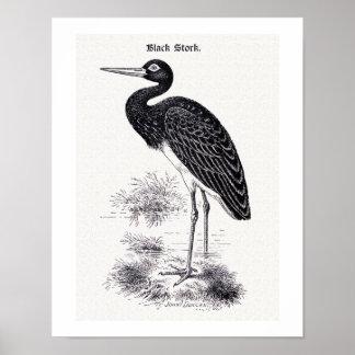 """""""Black Stork"""" Vintage Illustration Poster"""