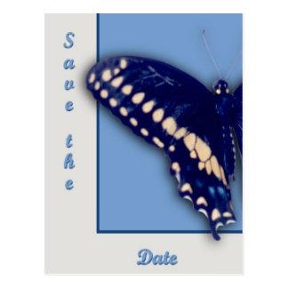 Black Swallow Longtail Postcard