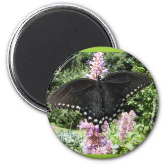 Black Swallowtail 67 ~ magnet