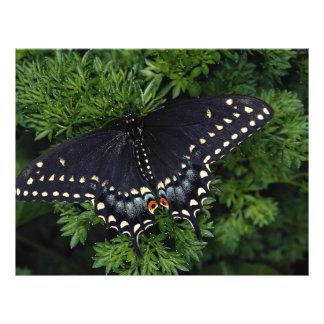 Black swallowtail adult custom flyer