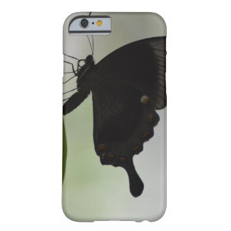 Black Swallowtail Barely There iPhone 6 Case