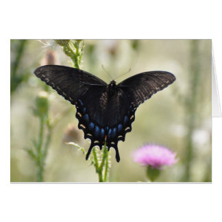 Black Swallowtail Butterfly Greeting Cards
