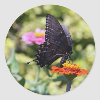 Black Swallowtail Butterfly Classic Round Sticker